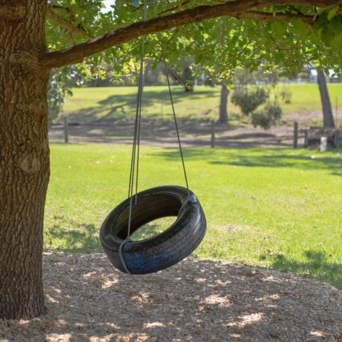 Environmental Sustainability - Tyre Swing