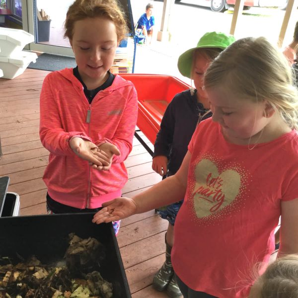 Experiential Learning - Exploring Compost & Insects