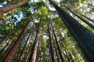 Help us grow our very own forest