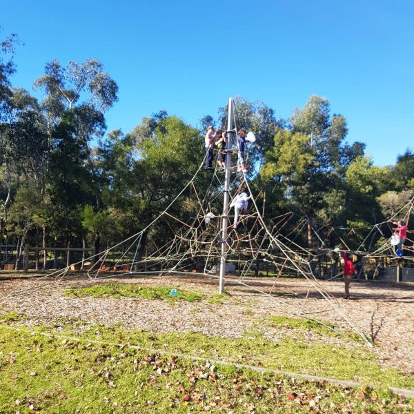 Health Education - Climbing the Spider Web