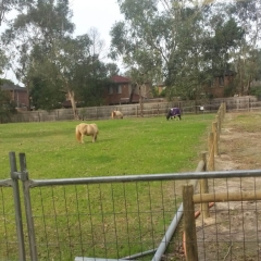 Horse Riding - Tethered in the Playground