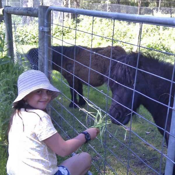 Horse Riding Lessons - Feeding the Ponies