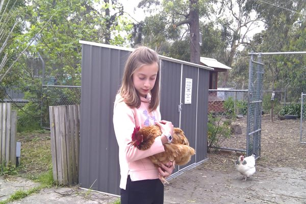 Privacy Policy - Girl with Chicken
