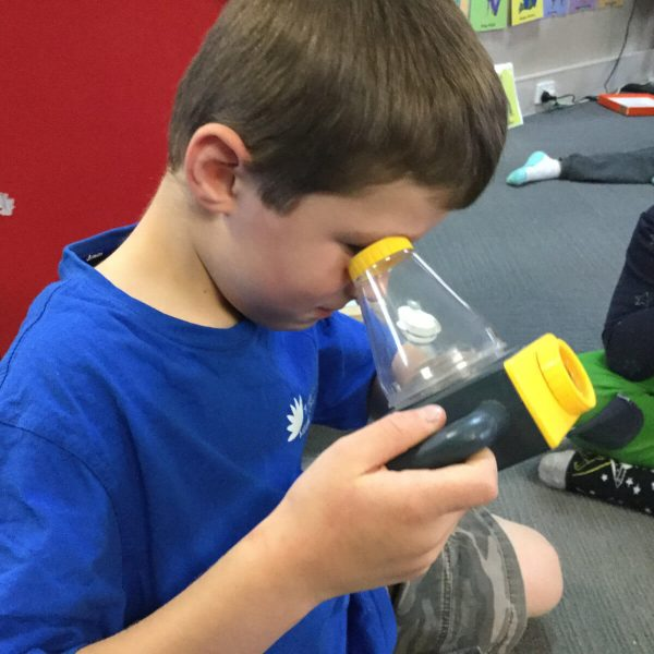 Science & STEAM - Exploring Insects